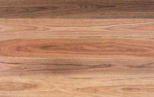 Spotted Gum Swatch A